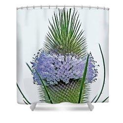 Teasel On White Shower Curtain