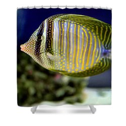 Technicolor Fish Shower Curtain by Madeline Ellis
