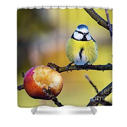 Shower Curtain featuring the photograph Tempting by Torbjorn Swenelius