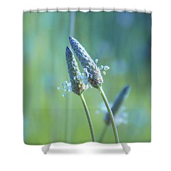 Tender Lovers Shower Curtain by Aimelle