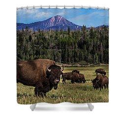Tending The Herd Shower Curtain