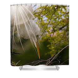 Shower Curtain featuring the photograph Tending To The Nest by Kelly Marquardt