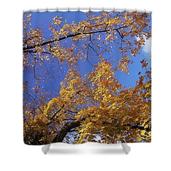 Tennessee Tree 1 Shower Curtain