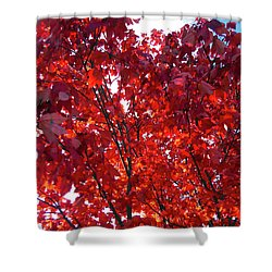 Tennessee Trees 3 Shower Curtain by Jeanne Forsythe
