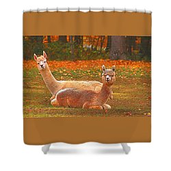 Teribus And Major Shower Curtain by Allen Beatty