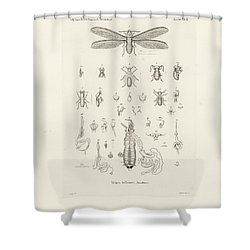 Termites, Macrotermes Bellicosus Shower Curtain