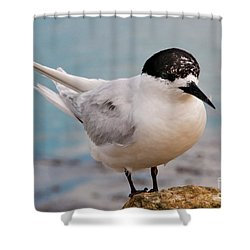 Shower Curtain featuring the photograph Tern 1 by Werner Padarin