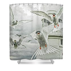 Tern Attack Shower Curtain by Brian Tarr