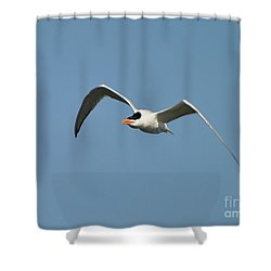 Tern Flight Shower Curtain by Al Powell Photography USA