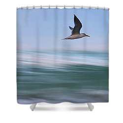 Shower Curtain featuring the photograph Tern Flight Vert by Laura Fasulo