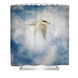Tern In Flight With Fish Shower Curtain