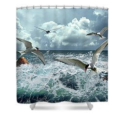 Terns In The Surf Shower Curtain