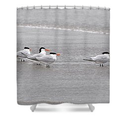 Terns Wading Shower Curtain by Al Powell Photography USA
