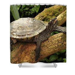Tess The Map Turtle #3 Shower Curtain