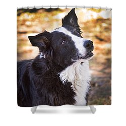Tessie 8 Shower Curtain by Rich Franco
