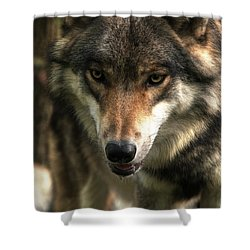 Teton Dribbling Shower Curtain by William Fields