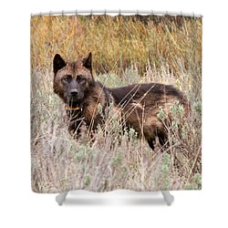 Teton Wolf Shower Curtain