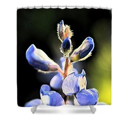 Texas Blue Bonnet Impressions 1 Shower Curtain by Carolina Liechtenstein