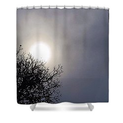 #texas Blue #sky, Where Have You Been Shower Curtain by Austin Tuxedo Cat