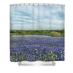 Texas Bluebonnets 13 Shower Curtain