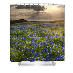 Texas Bluebonnets At Sunrise Shower Curtain