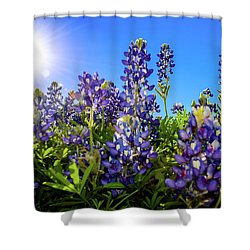 Texas Bluebonnets Backlit II Shower Curtain