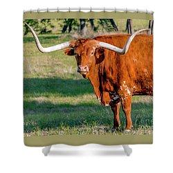 Texas Hill Country Longhorn 9962a Shower Curtain