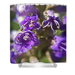 Shower Curtain featuring the photograph Texas Lilac Chaste Tree Macro by Robyn Stacey