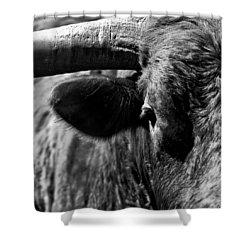 Texas Longhorn Bulls Eye Shower Curtain by  Onyonet  Photo Studios
