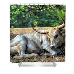 Texas Longhorn Gentle Giant Shower Curtain