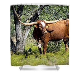 Shower Curtain featuring the photograph Texas Longhorn Steer by David Morefield