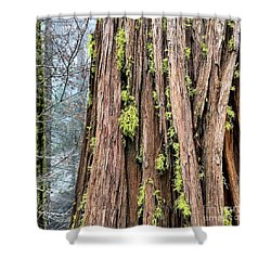 Texturing Shower Curtain by Paul Foutz