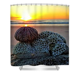 Seashell Surprise Shower Curtain