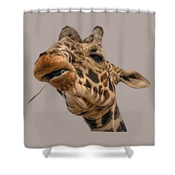 Thank You Shower Curtain by Mark Myhaver