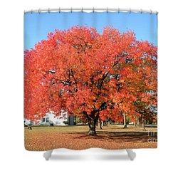 Thanksgiving Blessings Shower Curtain