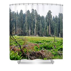 Shower Curtain featuring the photograph Tharps Log Meadow by Kyle Hanson