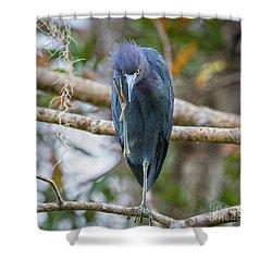 That Feels Great - Little Blue Heron Shower Curtain