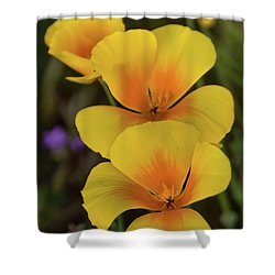 Shower Curtain featuring the photograph That Golden Spring Glow  by Saija Lehtonen