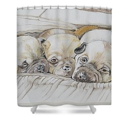The 3 Puppies Shower Curtain