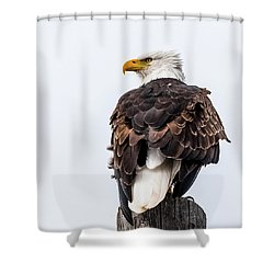 The Alert Shower Curtain by Yeates Photography