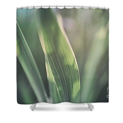 The Allotment Project - Sweetcorn Leaves Shower Curtain