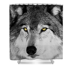 Shower Curtain featuring the photograph The Alpha Portrait by Mircea Costina Photography