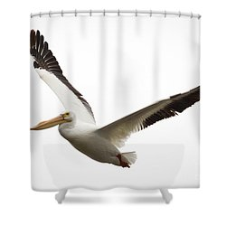 The Amazing American White Pelican Shower Curtain by Ricky L Jones