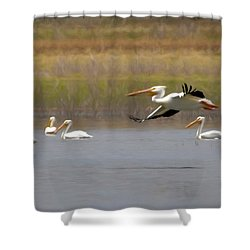 The American White Pelicans Shower Curtain by Ernie Echols