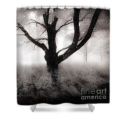 The Ancient Tree Shower Curtain