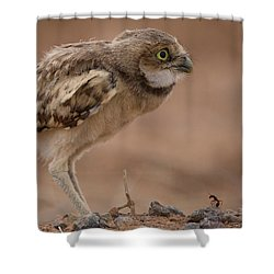The Ant And The Owl Shower Curtain