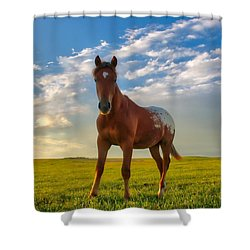 The Appy Shower Curtain