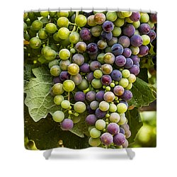 The Art Of Wine Grapes Shower Curtain by Teri Virbickis