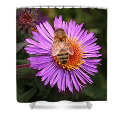 The Aster And The Bee Shower Curtain