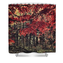 The Autumn Colors Shower Curtain